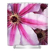 Clematis Close Up Shower Curtain