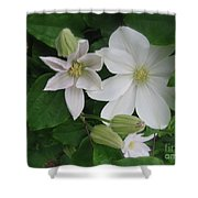 Clematis In Bloom  Shower Curtain