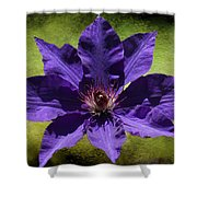 Clematis On Stone Shower Curtain