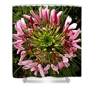 Cleome Shower Curtain