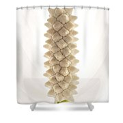 Clevelands Peace Lily Shower Curtain