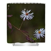 Climbing Aster Shower Curtain