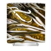 Clingfish On Crinoid, Australia Shower Curtain