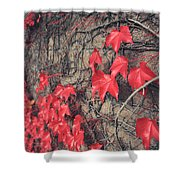 Clinging Shower Curtain by Laurie Search