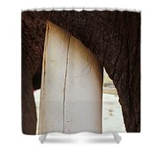 Clos-up Of An Asian Elephants Massive Shower Curtain