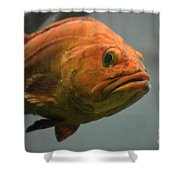 Close And Fishy Shower Curtain