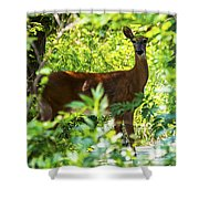 Close Eye Shower Curtain