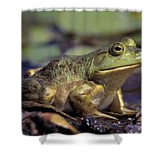 Close-up Of A Bullfrog Shower Curtain