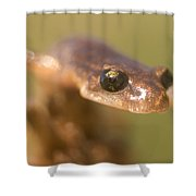 Close Up Of A California Newt Standing Shower Curtain