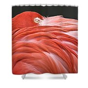 Close Up Of A Flamingo Resting Its Head Shower Curtain