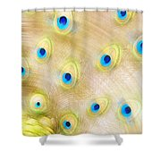 Close Up Of A Peacock Tail Shower Curtain