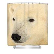 Close Up Of A Polar Bear, Churchill Shower Curtain