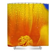 Close Up Of A Poppy With Dew On The Shower Curtain