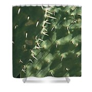 Close-up Of A Prickly Pear Cactus Shower Curtain
