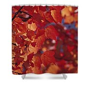 Close-up Of Autumn Leaves Shower Curtain