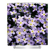 Close-up Of Bluet Flowers Houstonia Shower Curtain