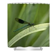 Close-up Of Dragonfly Perched On Leaf Shower Curtain
