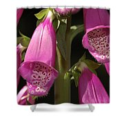 Close Up Of Foxglove Digitalis Flowers Shower Curtain