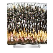 Close-up Of Luna Moth Wing Shower Curtain