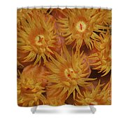 Close-up Of Orange Cup Coral Shower Curtain
