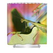 Close-up Of Praying Mantis Shower Curtain