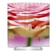 Close Up Of Rose Showing Petal Detail Shower Curtain