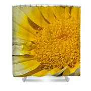 Close Up Of The Inside Of A Yellow And White Sun Flower Shower Curtain