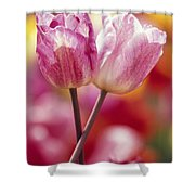 Close-up Of Tulips Shower Curtain