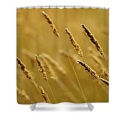 Close-up Of Wheat Shower Curtain
