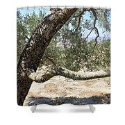 Close Up Olive Tree Shower Curtain