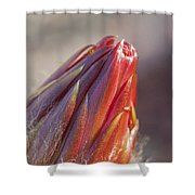 Close Up On Cactus Flower Bud Shower Curtain