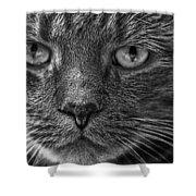 Close Up Portrait Of A Cat Shower Curtain