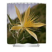 Close-up View Of A Blazing Star Shower Curtain