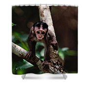 Close View Of A Baby Macaque Shower Curtain