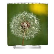 Close View Of A Dandelion Gone To Seed Shower Curtain