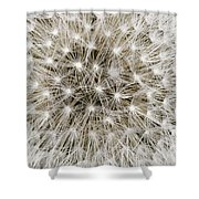 Close View Of A Dandelion Seed Head Shower Curtain