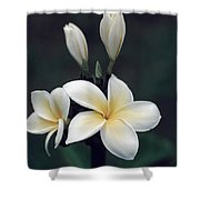 Close View Of A Delicated Plumeria Shower Curtain