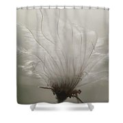 Close View Of A Feathery Seed Pod Shower Curtain