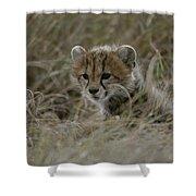 Close View Of A Juvenile Cheetah Shower Curtain