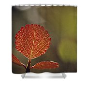 Close View Of A Leaf Shower Curtain