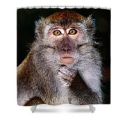 Close View Of A Long-tailed Macaque Shower Curtain