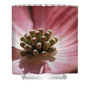 Close View Of A Pink Dogwood Blossom Shower Curtain