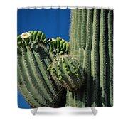 Close View Of A Saguaro Cactus Saguaro Shower Curtain