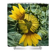 Close View Of A Sunflower Blossom Shower Curtain