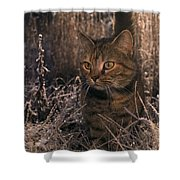 Close View Of A Tabby Cat Shower Curtain