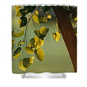 Close View Of A Tree Branch And Leaves Shower Curtain