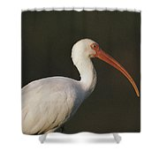 Close View Of A White Ibis Shower Curtain