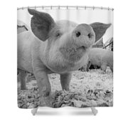 Close View Of A Young Pig In A Snowy Shower Curtain
