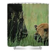 Close View Of An American Bison Shower Curtain