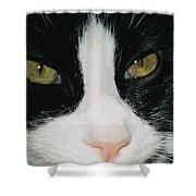 Close View Of Black And White Tabby Cat Shower Curtain
